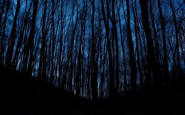 Dark Forest Background Aesthetic 500x448 Download Hd Wallpaper Wallpapertip