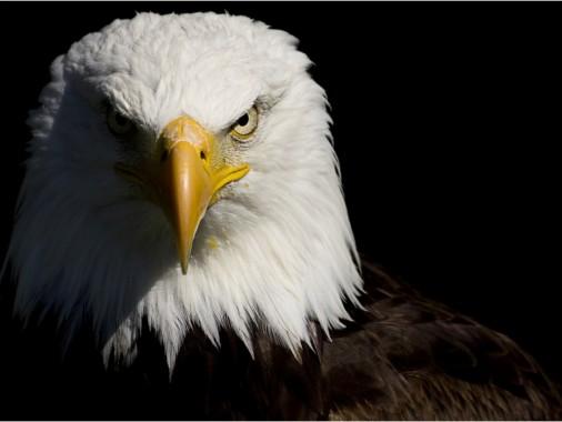 Black Red Eagle Logo 748x567 Download Hd Wallpaper Wallpapertip