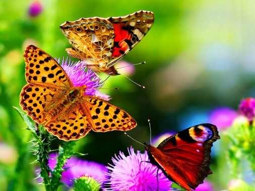 Stones And A Butterfly - Blue Nature Wallpaper Hd ...