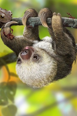 Cute Baby Sloth X Pixels Cute Baby Animals Sloth 640x960 Download Hd Wallpaper Wallpapertip
