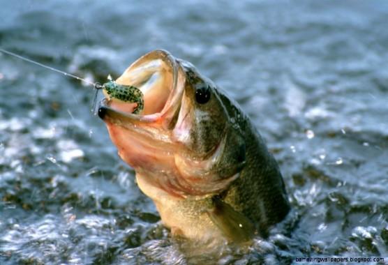 Http 4 Bp Blogspot Com Mgvd71vwafg T Fishing Fishing Bass Background 1440x1118 Download Hd Wallpaper Wallpapertip