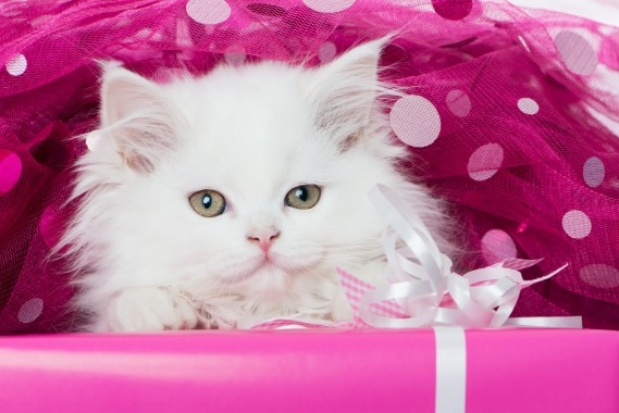 Cute Kitty Wallpapers Wallpapers Free Cute Kitty Wallpapers Wallpaper Download Wallpapertip