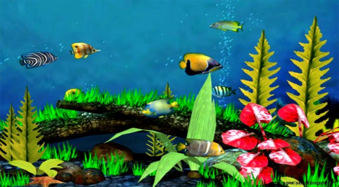 9 94967 desktop 3d live fish wallpaper dowload moving fish