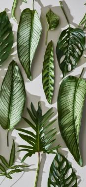 Plant Wallpaper Iphone 1125x2436 Download Hd Wallpaper Wallpapertip